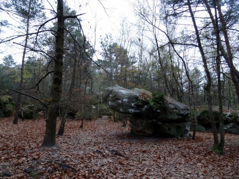 DSC02999 Fontainebleau - 25 bosses