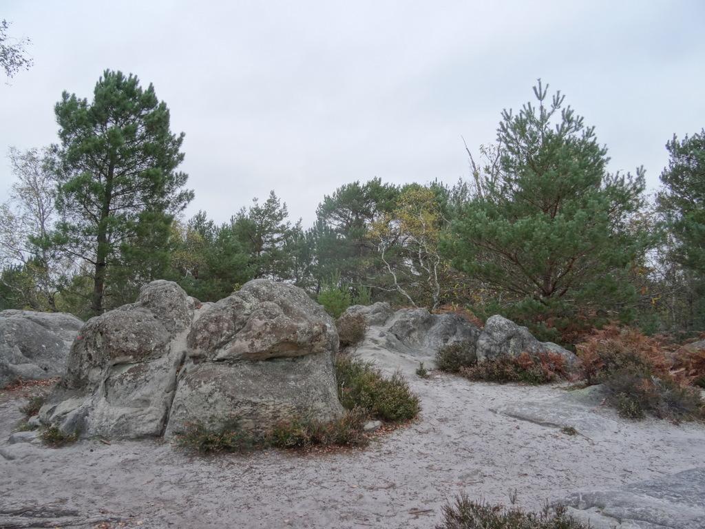 DSC03006 Fontainebleau - 25 bosses