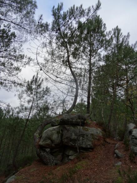 DSC03061 Fontainebleau - 25 bosses
