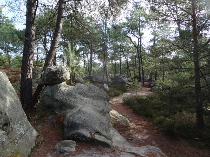 DSC03074 Fontainebleau - 25 bosses