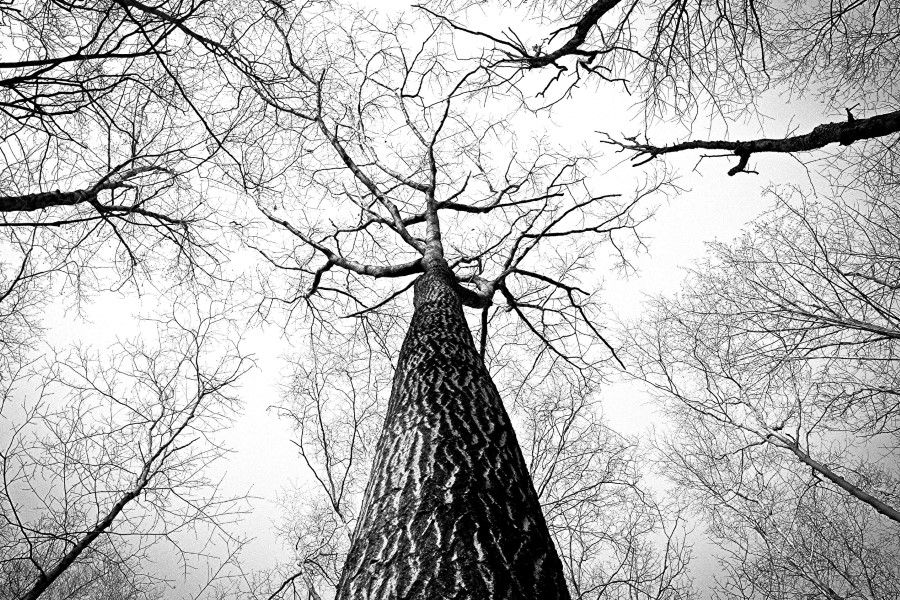 gratisography-tall-tree-barren-thumbnail